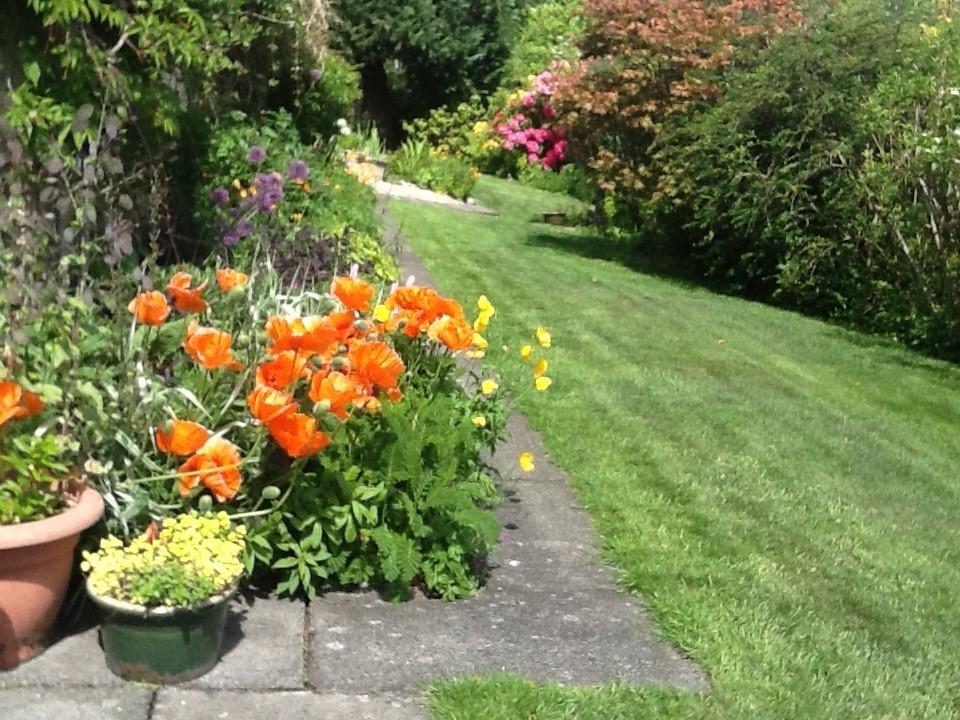 Millersneuk's Garden